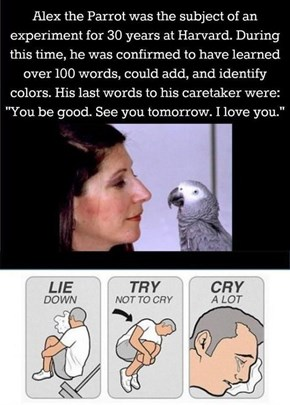 Alex the Parrot's Last Words
