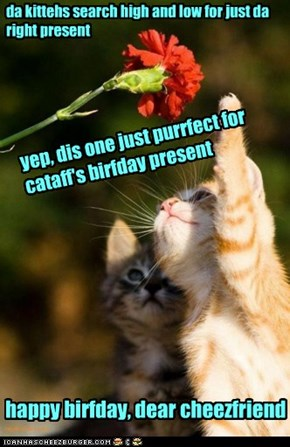 happy birthday, cataff!