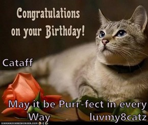 Cataff May it be Purr-fect in every Way             luvmy8catz
