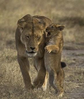 Mum! Mommy! Mom!