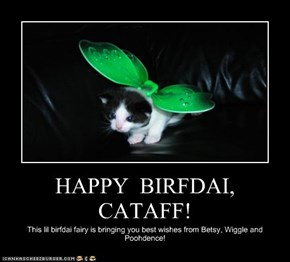 HAPPY  BIRFDAI,  CATAFF!