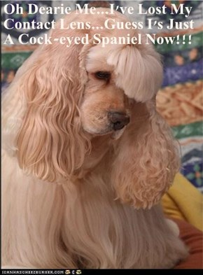 Oh Dearie Me...I've Lost My Contact Lens...Guess I's Just A c**k-eyed Spaniel Now!!!