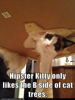 Hipster Kitty only likes the B side of cat trees.