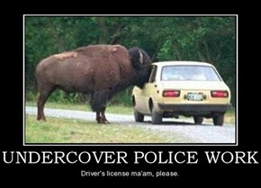 Beware the Bison Police