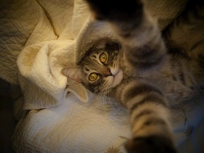 9 Cats Taking Selfies