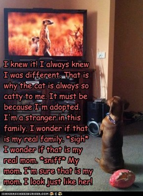I knew it! I always knew I was different. That is why the cat is always so catty to me. It must be because I'm adopted. I'm a stranger in this family. I wonder if that is my real family. *sigh* I wonder if that is my real mom. *sniff* My mom. I'm sure tha