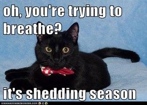 oh, you're trying to breathe?  it's shedding season