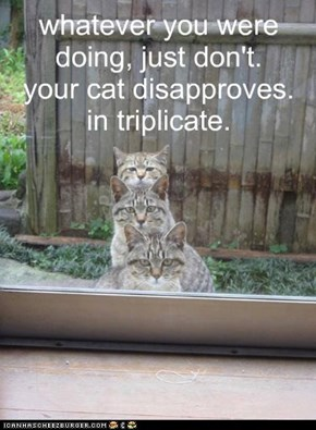 whatever you were doing, just don't. your cat disapproves. in triplicate.