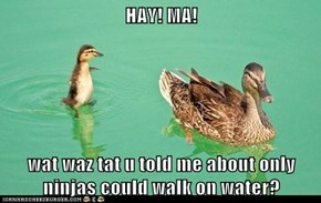 HAY! MA!  wat waz tat u told me about only ninjas could walk on water?