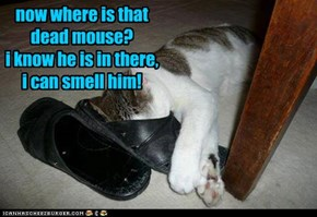 now where is that dead mouse? i know he is in there,  i can smell him!