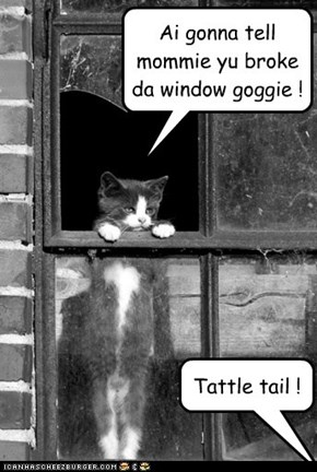Ai gonna tell mommie yu broke da window goggie !