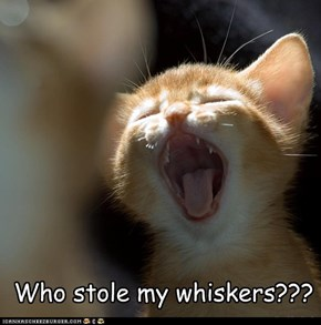 Who stole my whiskers???