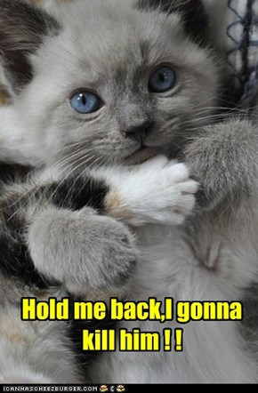 Hold me back,I gonna kill him ! !