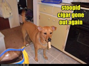stoopid cigar gone out again