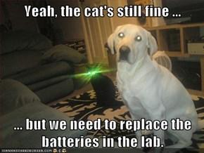 Yeah, the cat's still fine ...