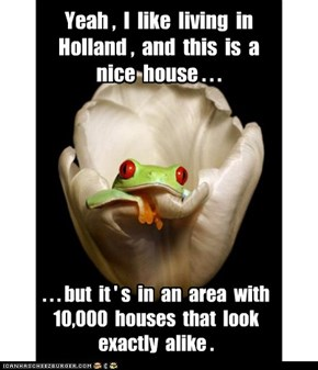Dutch frog dislikes living in a housing development.