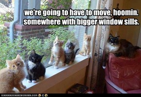 we're going to have to move, hoomin. somewhere with bigger window sills.