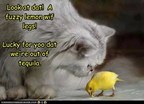 Look at dat!  A fuzzy lemon wif legs!  Lucky for yoo dat we're out of tequila.