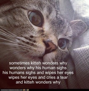 sometimes kitteh wonders why wonders why his human sighs his humans sighs and wipes her eyes wipes her eyes and cries a tear and kitteh wonders why
