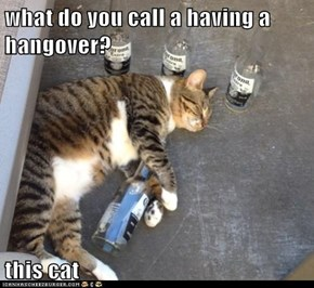 what do you call a having a hangover?  this cat
