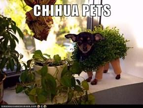 CHIHUA PETS