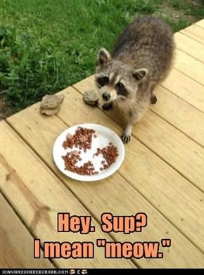 "Hey.  Sup? I mean ""meow."""