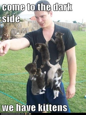 come to the dark side  we have kittens