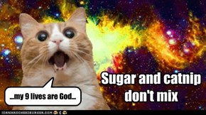 Sugar and catnip don't mix