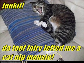 lookit!  da toof fairy lefted me a cat nip mousie!
