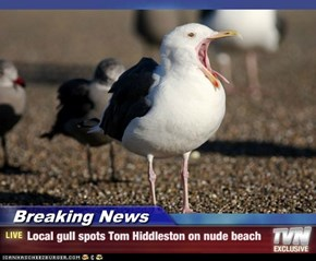 Breaking News - Local gull spots Tom Hiddleston on nude beach