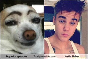 Dog with eyebrows Totally Looks Like Justin Bieber