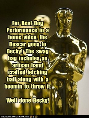 For  Best  Dog Performance  in  a  home  video,  the Boscar  goes  to  Becky!   The  swag bag  includes  an  artisan  hand  crafted  fetching ball  along  with  a hoomin  to  throw  it.  Well  done  Becky!
