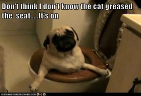 Don't think I don't know the cat greased the  seat.....It's on