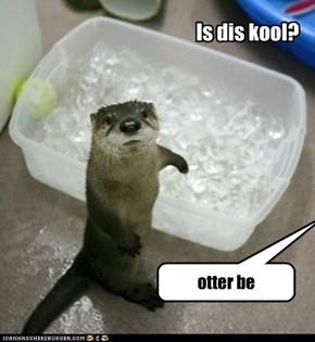 Is dis kool?