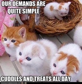 There's no negotiating with kittehs