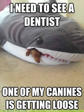 Cutest Dental Problem Ever