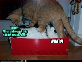 Oh hey!  When did we get this double-decker box?