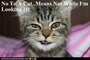 No To A Cat..Means Not While I'm Looking !!!