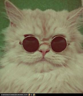 Truman Capote Cat