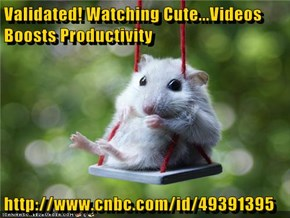 Validated! Watching Cute...Videos Boosts Productivity  http://www.cnbc.com/id/49391395