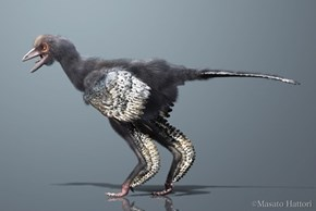Possibly the Earliest Known Bird: The Aurornis Xui