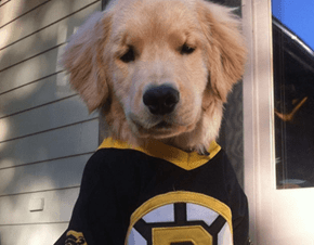 This Is Ray Charles and Bruins Fans Want Him to Drop the Puck