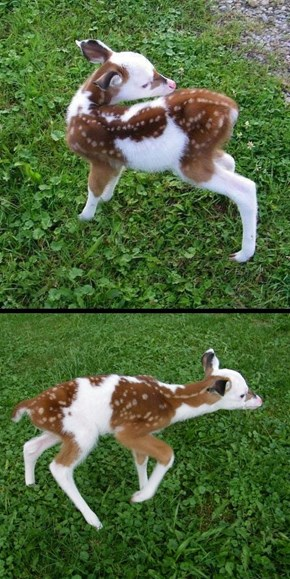 I'm Quite Fond of Fawns