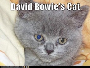 David Bowie's Cat