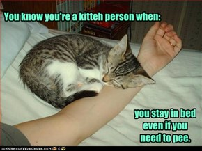 You know you're a kitteh person when: