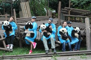 The Backstreet Boys are Holding Pandas