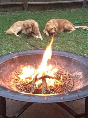 Fire Breathing Dog