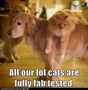 All our lol cats are fully lab tested.