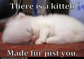 There is a kitteh  Made fur just you.