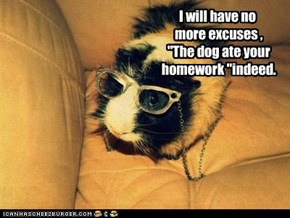 "I will have no  more excuses ,  ""The dog ate your  homework ""indeed."